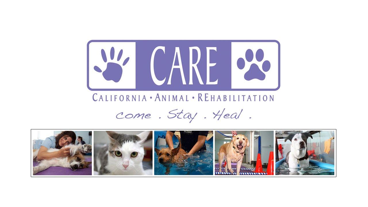 California Animal Rehabilitation | Los Angeles Pet