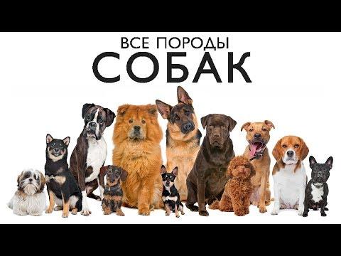 Как узнать породу собак