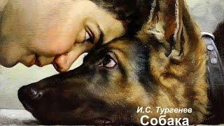 """""""Собака """"- автор И.С. Тургенев, чит. В.Алёшин"""