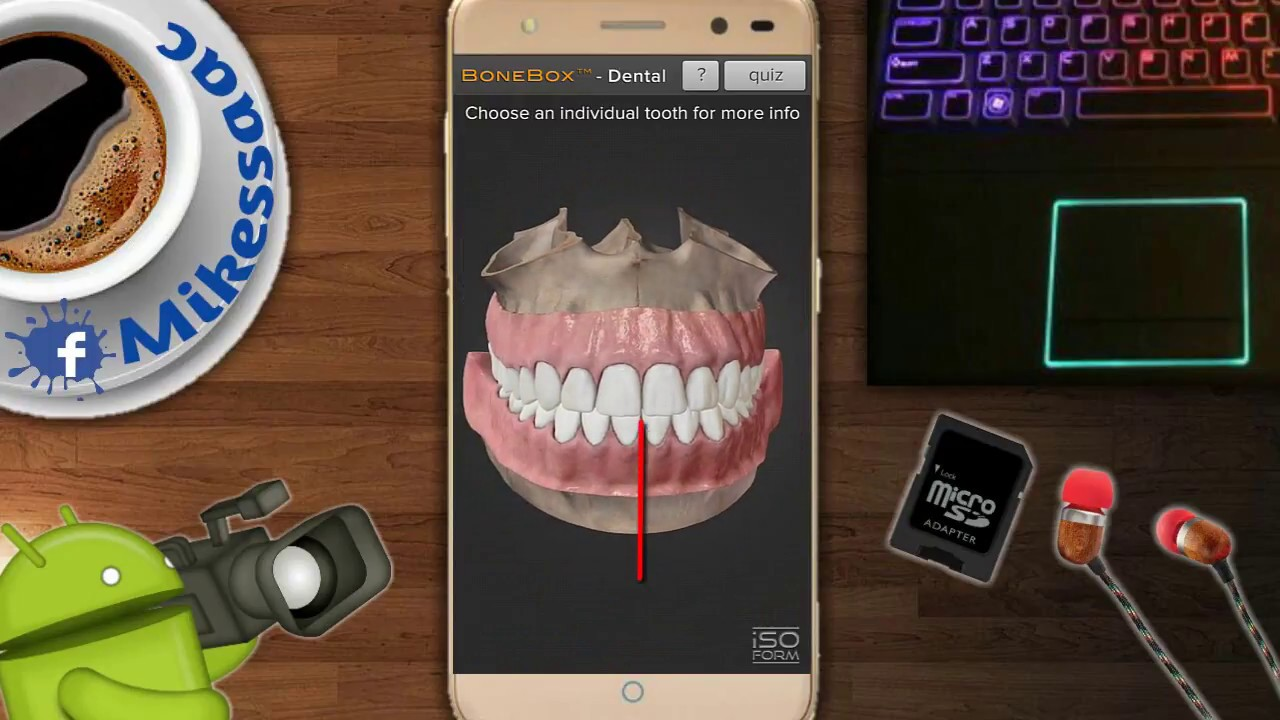Morfología Dental - Caras de los Dientes - Anatomía Dental - BIEN ...