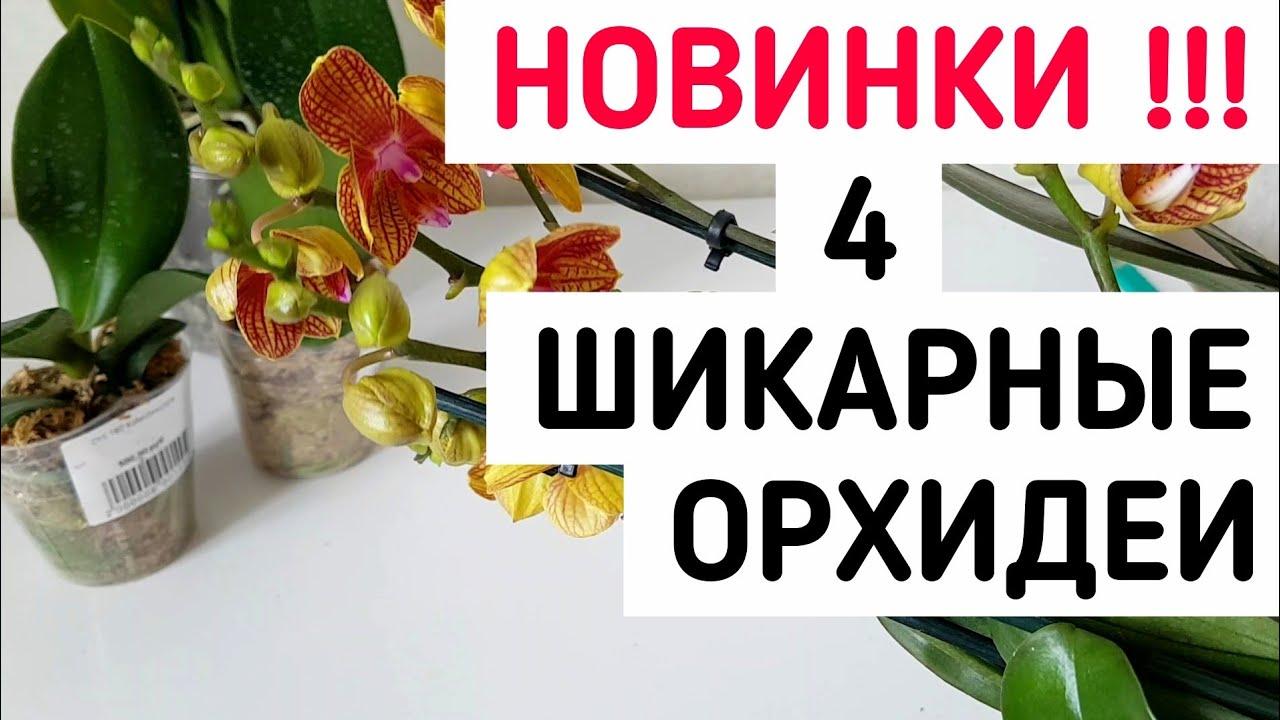 ПОТРЯСАЮЩИЕ ОРХИДЕИ почтой Sogo Gibson и что делать после получения | ОРХИДЕЯ ФАЛЕНОПСИС orchid