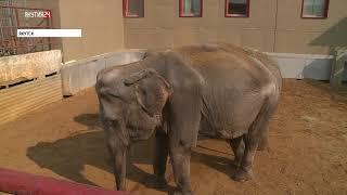 Якутяне подписывают петицию против цирков с участием диких животных в республике