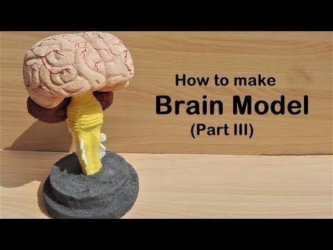 how to make Brain Stem Model | 3d thermocol/Styrofoam carving
