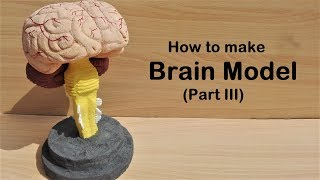 Gambar cover how to make Brain Stem Model | 3d thermocol/Styrofoam carving