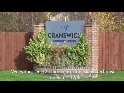 "Hull Pig Save: Cranswick ""Foods"" 13-11-2017"