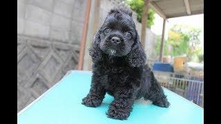 https://passerellewan.jp/puppies/?type=1.