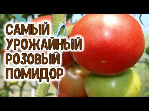 САМЫЙ УРОЖАЙНЫЙ РОЗОВЫЙ ВЫСОКОРОСЛЫЙ ПОМИДОР | выращивание | подкормить | горяченко | помидоры | томатов | теплице | помидор | томаты | огород | раиса