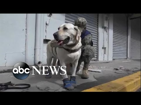 Meet Frida, the dog who comes to the rescue whenever disaster strikes