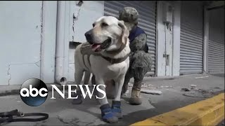 4-legged hero amongst the first responders in Mexico City