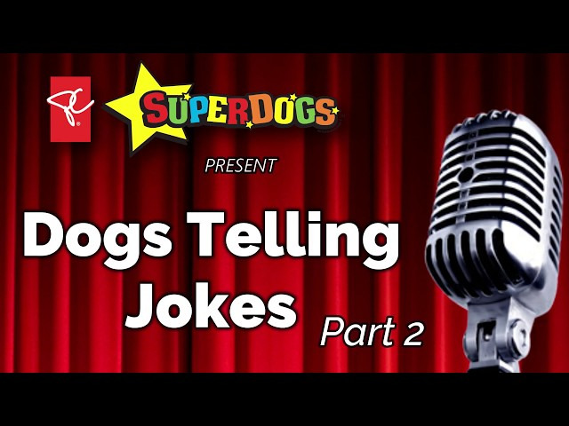 Dogs Telling Jokes: Knock Knock Part Two