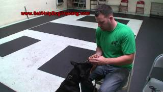 How To Train A Dog To Wear A Muzzle (k9-1.com)