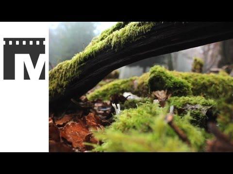 Showreel 2012 - Executive Producer Mark Kelly