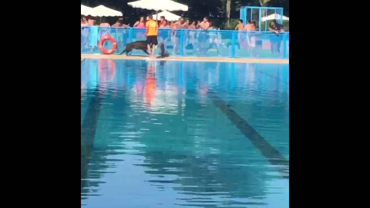 Un jabal en la piscina de tomelloso 1 youtube for Piscinas tomelloso