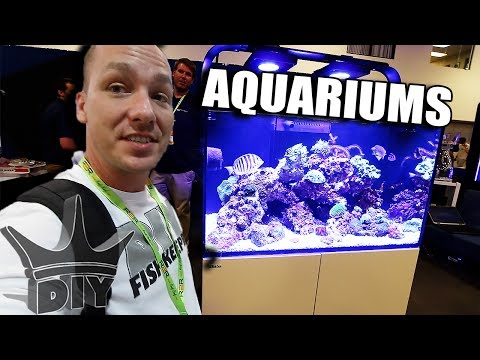 My trip to New York - AQUARIUM SHOW!!