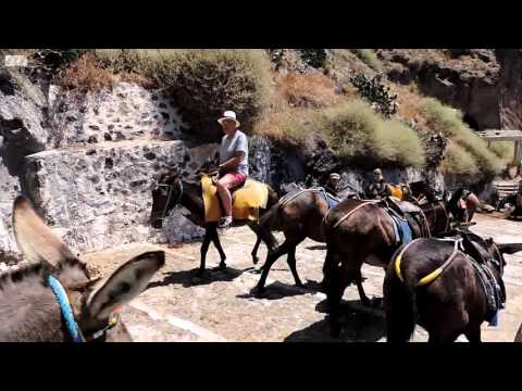On Santorini, anger over cruelty towards  'tourist donkeys'