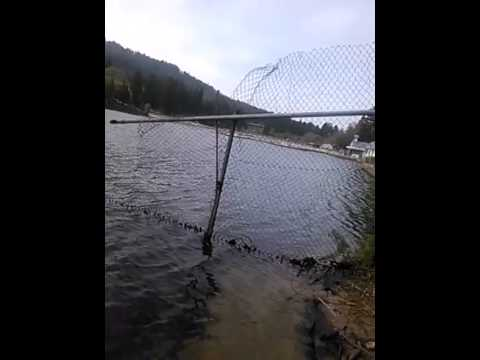 Lake gregory brown trout 4 18 2014 youtube for Lake gregory fishing report