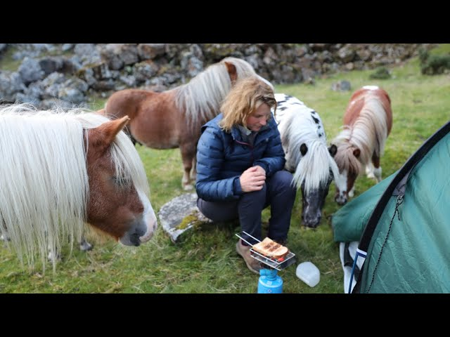 Camping on the Moor | 6 Ponies | 1 Dog | & The CAT!