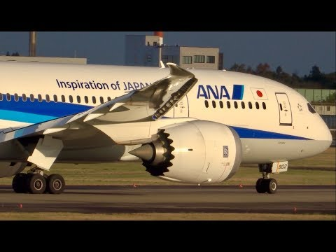 Beautiful Birds!! New Triton Blue[JA802A] ANA BOEING787-8 NH836 Dpt.CGK/Narita