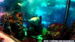 31 октября 2014 - День Рождения - Барселона: аквариум, Hard Rock Cafe, Halloween