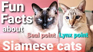 Siamese cats 101 | Top 10 Siamese cats facts  Fun facts about Siamese cats & Lynx point Siamese cat