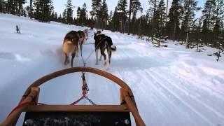犬ぞり動画3本目。 サウナスーツ張りの厚着なのに、震えるほど寒かった...
