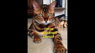 Приколы с кошками и котами топ