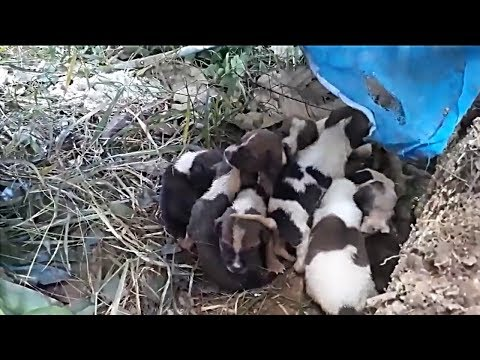 Rescue 11 Newborn Puppies & Their Mom Was Severely Abused in The Woods