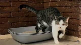 Лоток для кошек СмартОК: по-настоящему умный туалет  для кошек