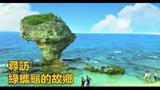 【預告】絕美珊瑚礁島 保護綠蠵龜大作戰!