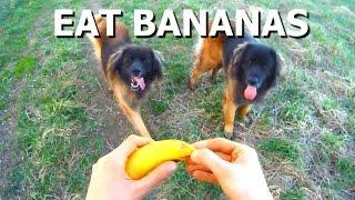 Когда собаки любят бананы больше мяса. Фрукторианцы =)