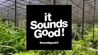 Mid/Side Recording - Lisbon - Estufa Fria - Botanic Garden