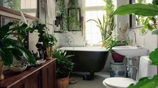 Какие домашние цветы подойдут для ванной комнаты - Какие домашние цветы подойдут для ванной комнаты https://youtu.be/dbqJoEd95UE Можно ли содержать комнатные растения...