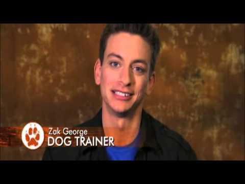 Download dogs 101 - miniature schnauzer