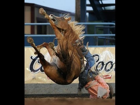Dangerous Horse Being Lunged - Review of Dangerous Rearing Horses & Causes