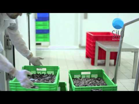 Silo Marine Products - Sea Cucumber