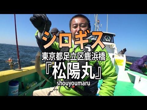 松陽丸・東京都鹿浜橋・シロギス【オフショアマガジン】