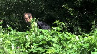 Avon Invasive Weeds Forum