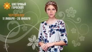 видео Гороскоп цветочный по дате рождения