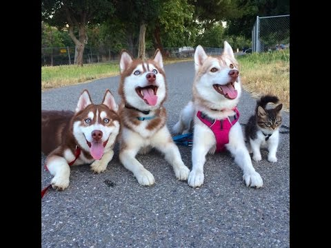 Thumbnail A Cat And Her Pals Going For A Walk