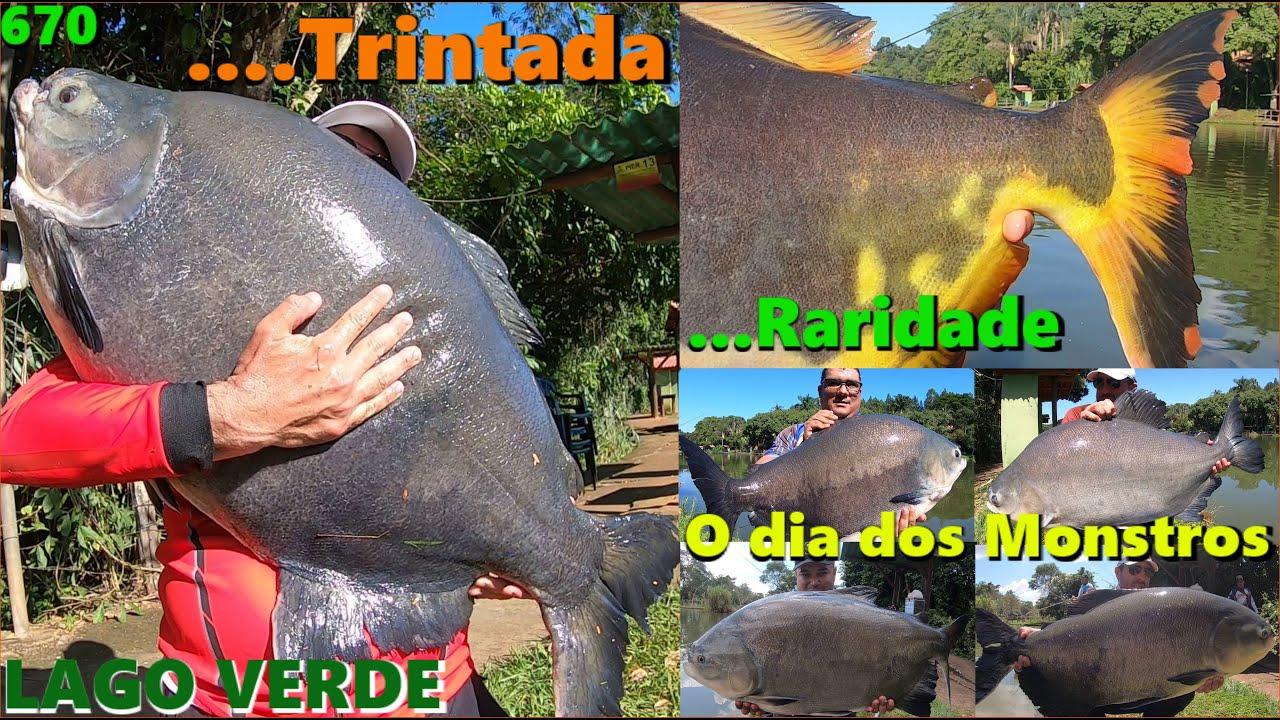 O dia dos MONSTROS com TRINTADA e uma RARIDADE no LAGO VERDE - Programa Fishingtur na TV 670