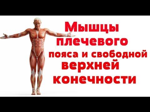 Видео по анатомии