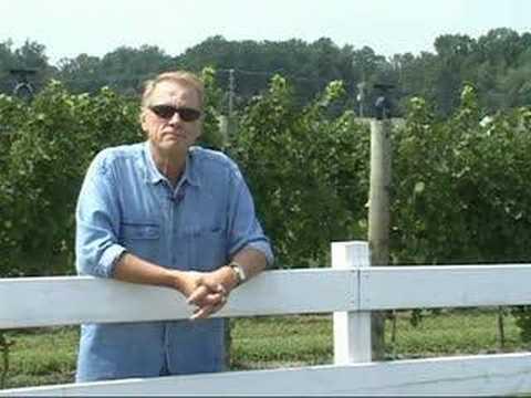 White Fences Vineyards