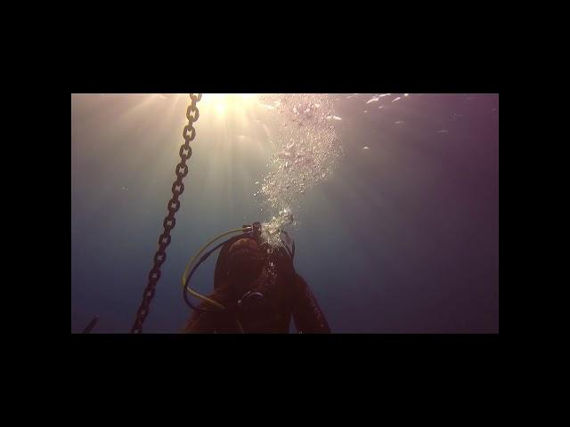 Lionfish removals compilation