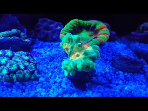 30g Long innovative marine update #4 new eauipment,corals,fish