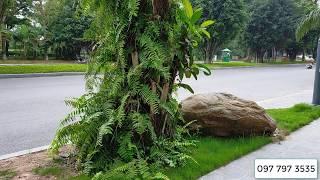 Cách trồng cây dương xỉ tạo cảnh quan đẹp