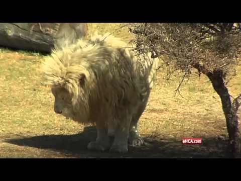 Three furry new residents have moved into the Joburg Zoo