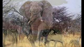 Ludwig Hirsch ~ Der Elefant ~