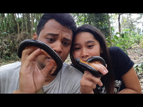 WOW GIANT DIPLOPODA IN INDONESIAN FOREST!!