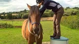 Young Horse clicker training -  preparation and bareback ride