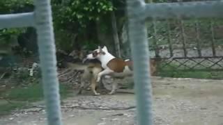 Animal Sex [Dog mating] - The Animal World
